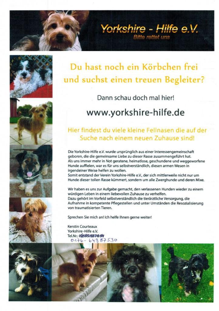 Gesucht Yorkshire Hilfe16122015